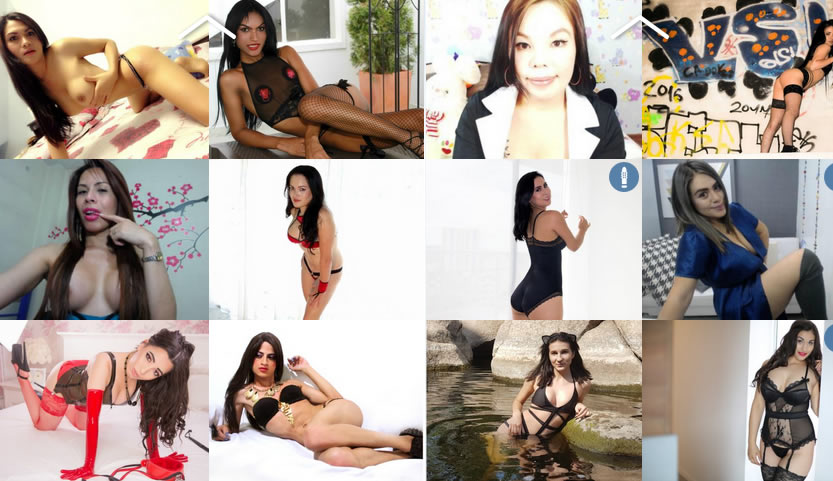 real transexual cams